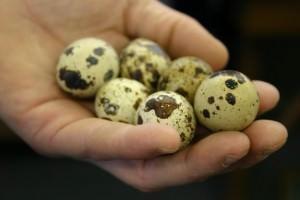 Польза перепелиных яиц для мужского здоровья