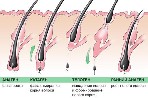 Дигидротестостерона