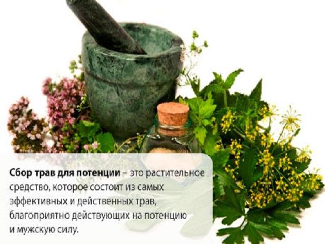 Трава крапива в лечение импотенции