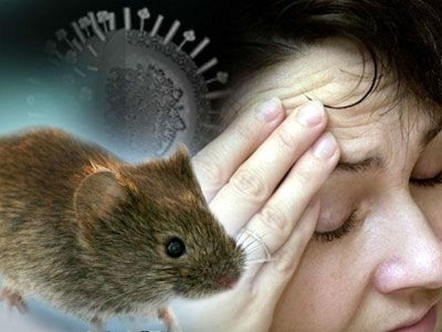 Продукты при мышиной лихорадке
