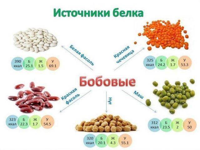Сколько понадобится энергии для расщепления белка?