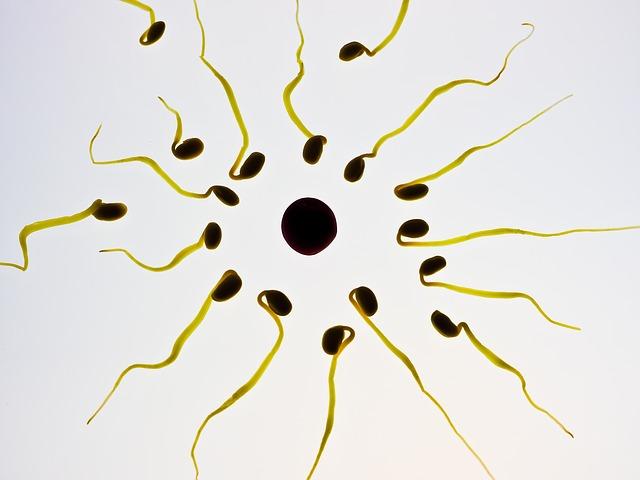 Спермограмма с морфологией