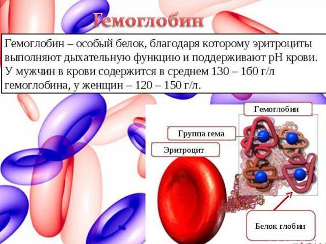 От чего низкий гемоглобин у Мужчин
