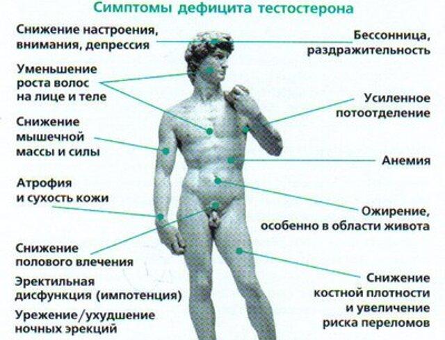 влияет ли размер члена Сибирский
