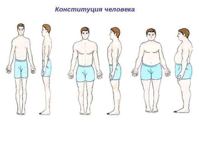Вес тела в зависимости от роста