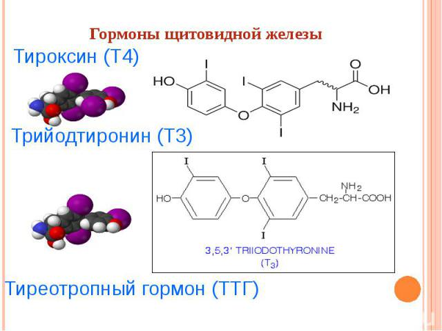 Тиреотропный гормон ттг 2 1300