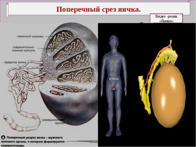 Боль в яичках у Мужчин причины