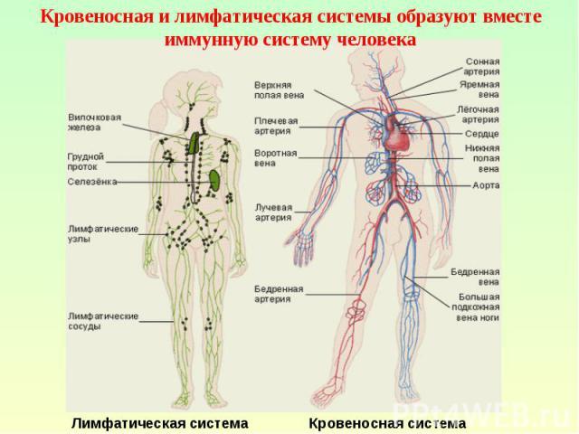 Откуда берутся венерологические заболевания