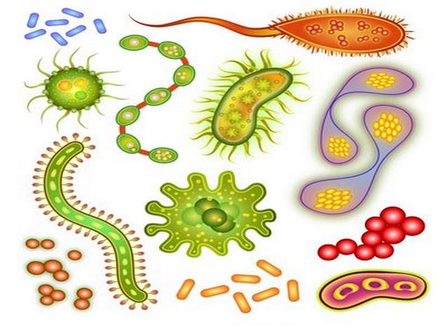 Инфекции передающиеся половымпутем симптомы у Женщин