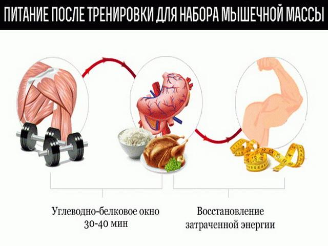 Рост мышц в возрасте