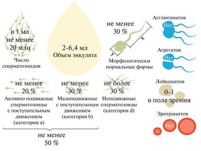 Простуда лейкоциты в сперме