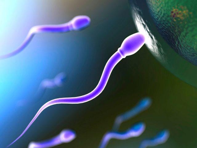 малоподвижные сперматозоиды