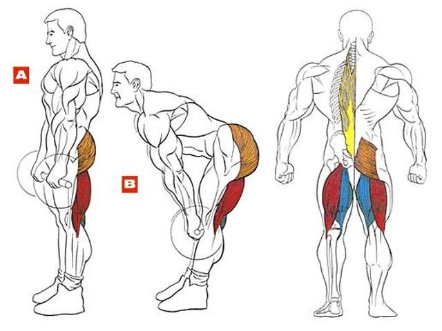 Румынская тяга для развития мышц ног
