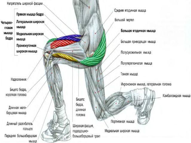 Выпады для развития мышц ног