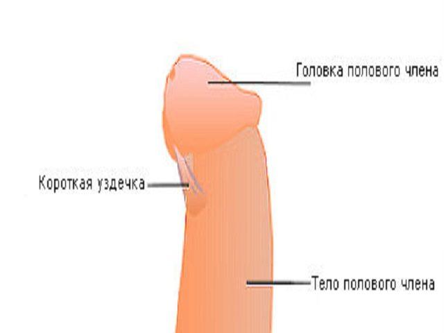Вредно пережимать половой член во время оргазма