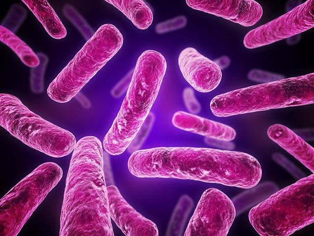 Увеличенные микроорганизмы