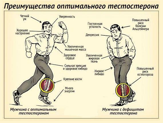 цинктерал и тестостерон у мужчин