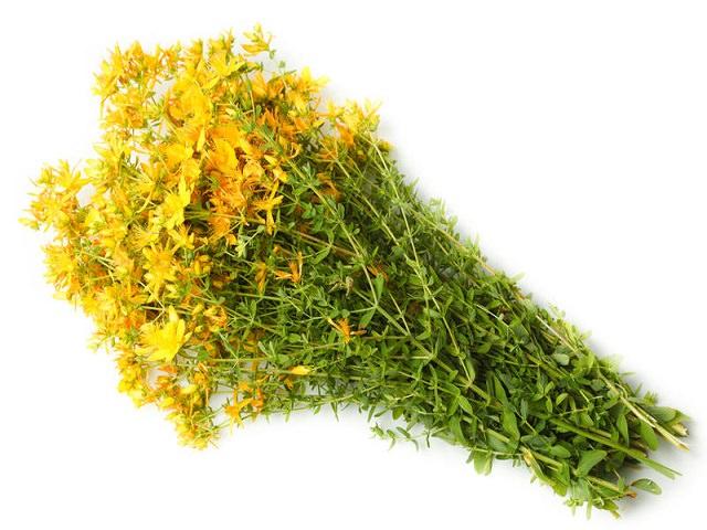 Какая польза травы зверобой для мужского организма