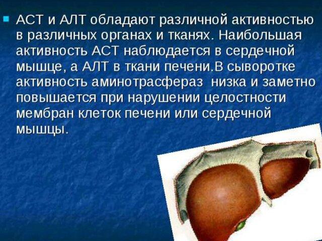 АЛТ в крови – что показывает Аланинаминотрансфераза