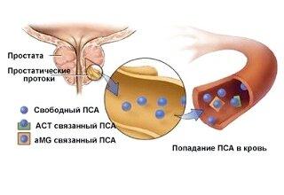 Уровень тестостерона у мужчин: норма в таблице, возраст и показатели гормона в зависимости от него, а также что такое андрогенная недостаточность
