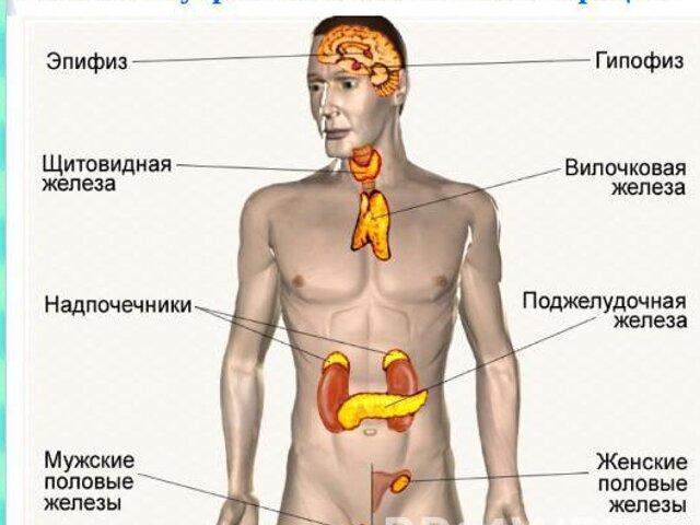железы