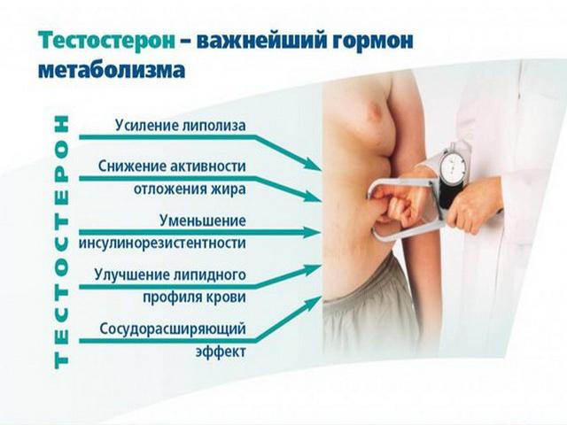 Гормон метаболизма