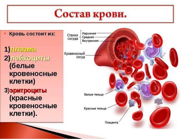 Незначительное превышение антиспермальных антител от нормы