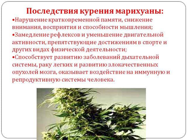 На что влияет курение травы на потенцию