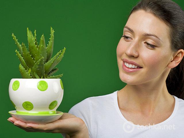 Растение богатое витаминами