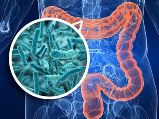 ЖКТ и бактерии