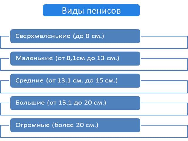 Длина головки члена