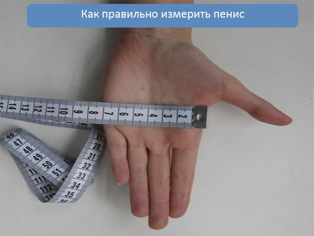 Как мерить диаметр члена